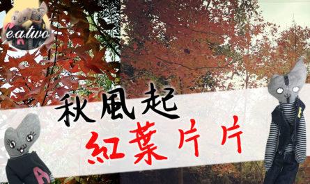 大棠楓香林