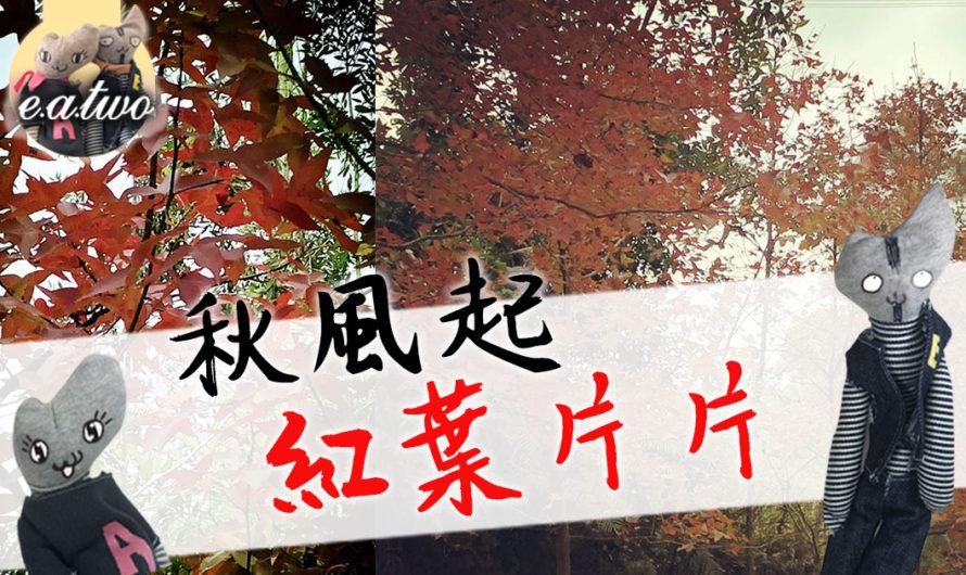 秋風起紅葉片片 即刻去元朗大棠打卡