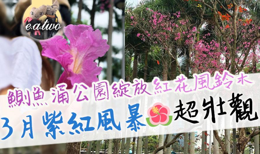 鰂魚涌公園綻放紅花風鈴木 3月紫紅風暴超壯觀