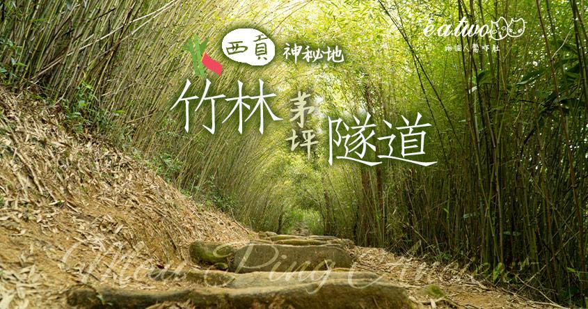 西貢神秘寶地 20分鐘到茅坪竹林隧道打卡
