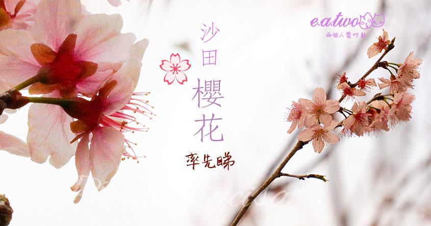 【2021賞花地圖】2月櫻花率先睇! 沙田單車路富士櫻驚喜開花