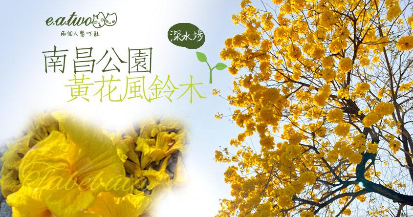【2021賞花地圖】南昌公園黃花風鈴木綻放黃到金 2月搶閘開花迎接片片黃海