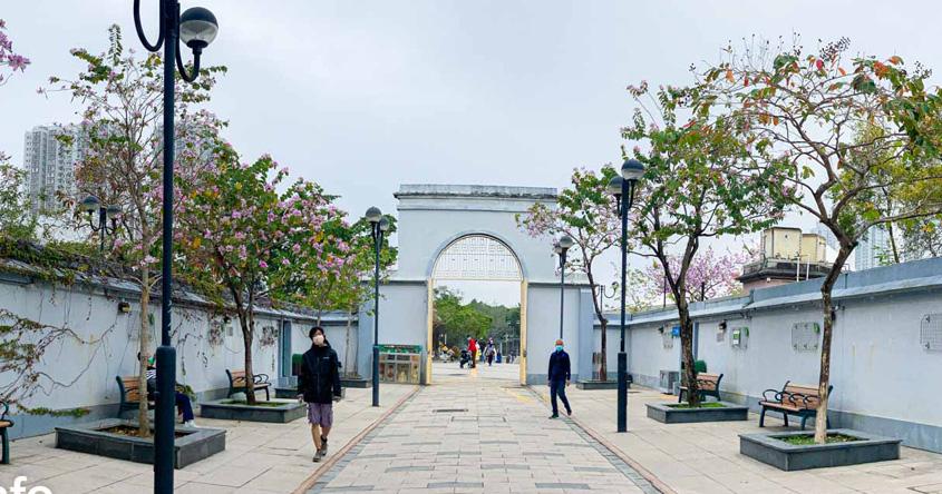 【2021賞花地圖】狀似洋紫荊!沙田公園粉色花廊 海量宮粉羊蹄甲燦爛盛開