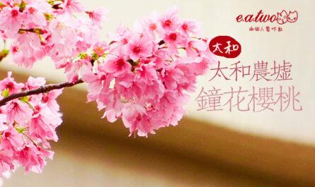 太和農墟鐘花櫻桃