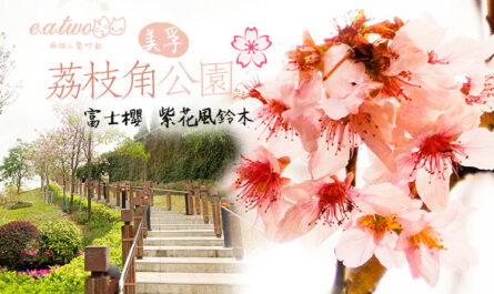 荔枝角公園+紫花風鈴木+富士櫻