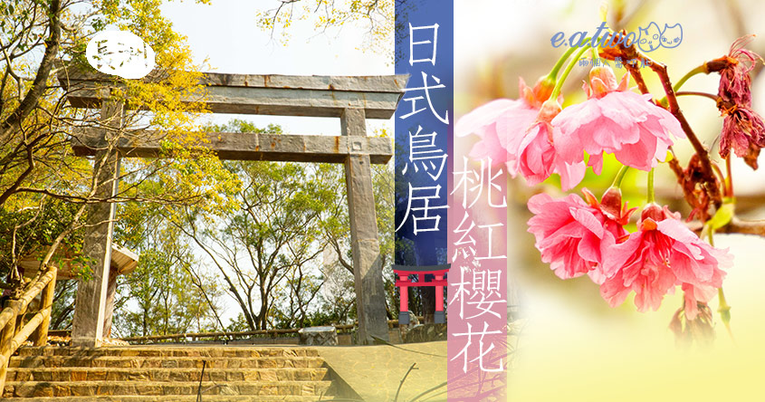 【2021賞花地圖】30分鐘船程穿越日本! 走訪日式鳥居兼神社繪馬打卡 一棵棵桃紅櫻花艷絕長洲