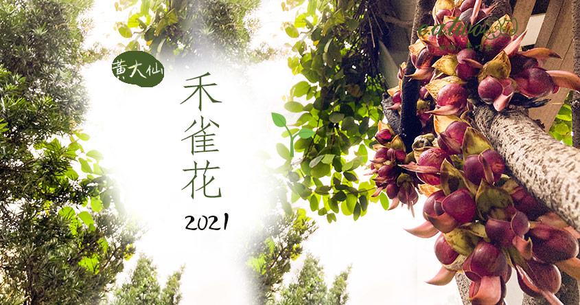 【2021賞花地圖】罕見瀕危保護植物 黃大仙禾雀花似玲瓏翡翠鳥