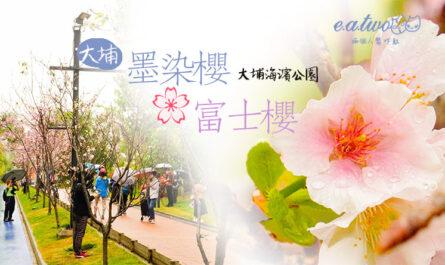 大埔海濱公園墨染櫻富士櫻玫瑰鼠尾草