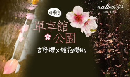 香港單車館公園吉野櫻鐘花櫻桃