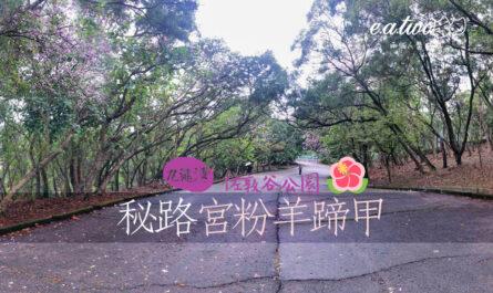 佐敦谷公園 秘路 宮粉羊蹄甲