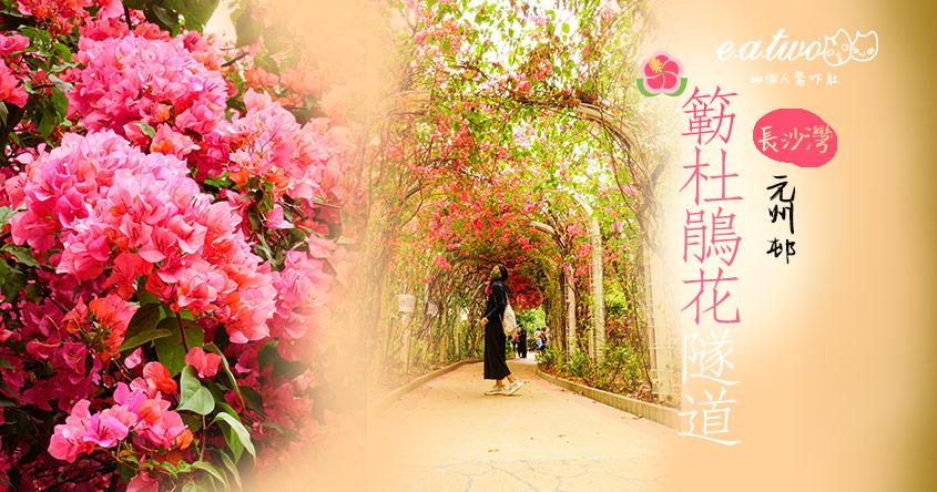 【2021賞花地圖】有心人辣手摧花? 元州邨30米長夢幻杜鵑花隧道 嬌艷紫紅媲美外國浪漫花海