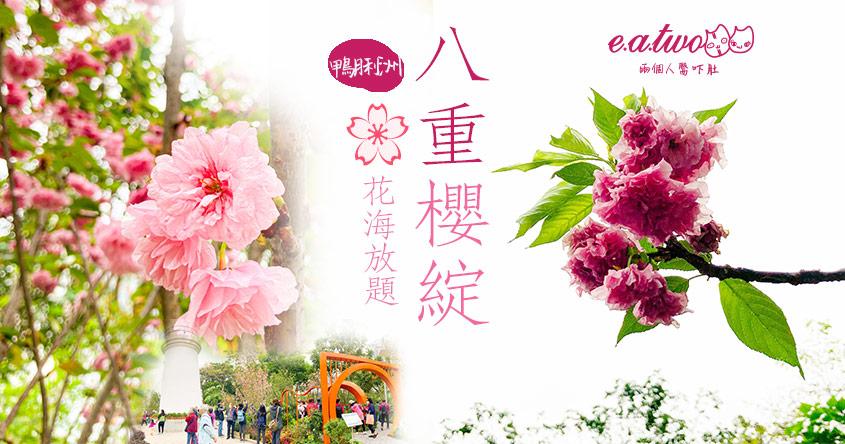 【2021賞花地圖】鴨脷洲海旁14棵八重櫻綻放 粉嫩花海放題任打卡