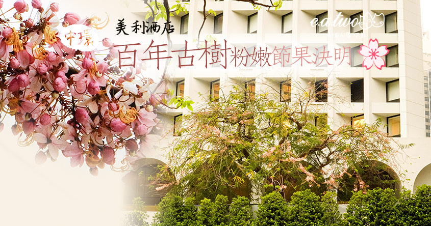 中環紅棉路美利酒店打卡 4月百年古樹綻放粉嫩奪目節果決明