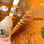 【2021賞花地圖】荃灣赤橙色隧道頓變港版千本鳥居 海濱逾10棵雞蛋花燦爛盛開